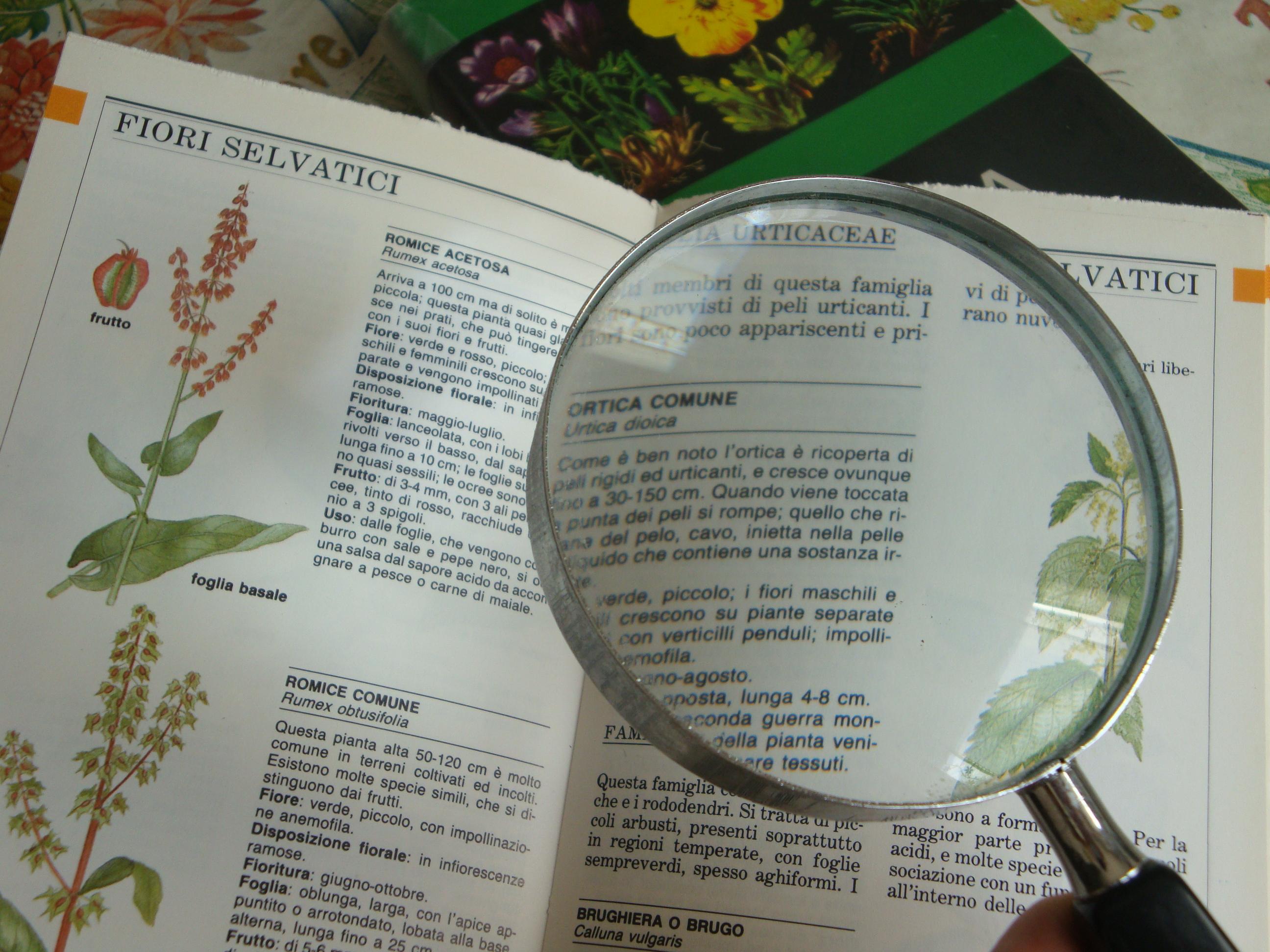 Impara tutti i termini usati in agricoltura e negli orti