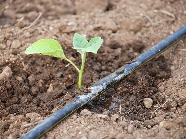 irrigazione goccia a goccia