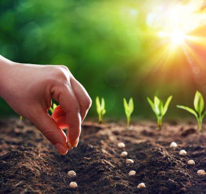 8 Consigli per evitare errori comuni quando iniziamo a coltivare l'orto